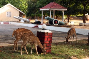 34-spotted-deer-fort-frederick-trincomalee