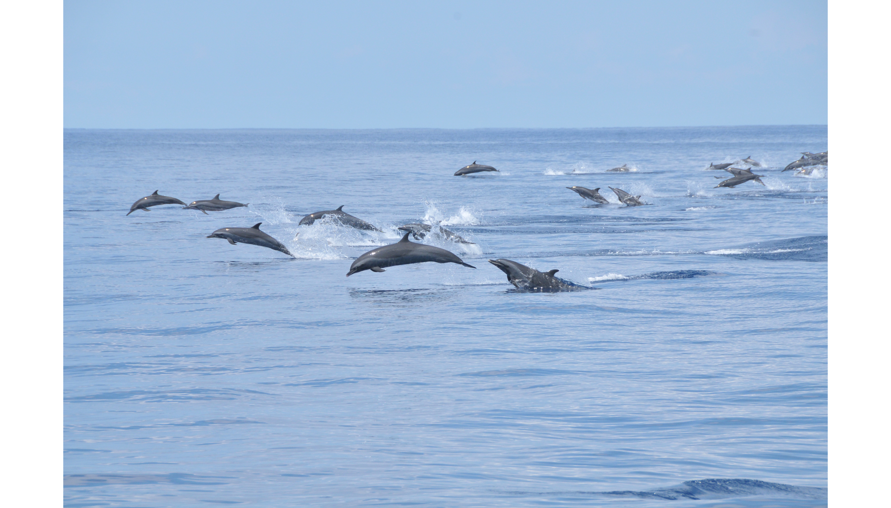 dolphins@CNT