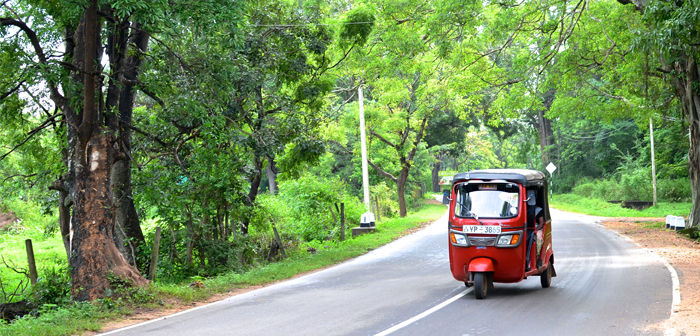 Learning to Drive in Sri Lanka – Nicole Smith